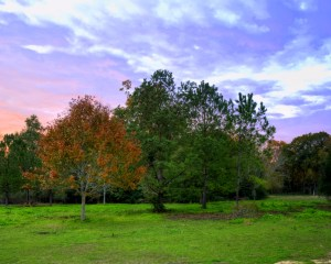 Red Oak - Dec 2011