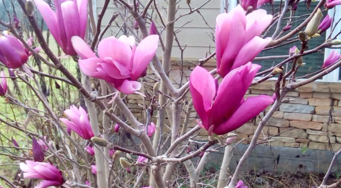 The Blooms of January