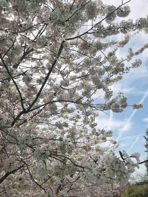 Spring Trip to DC
