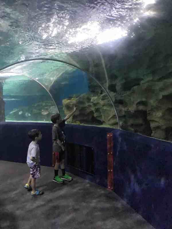 Visit to Cleveland Aquarium