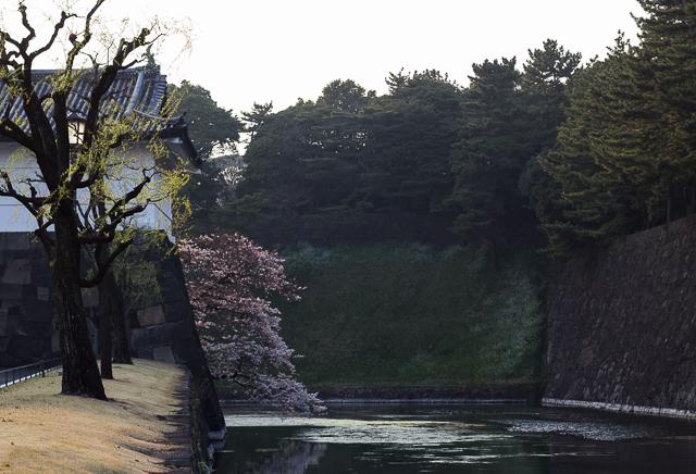 Sakura Kirsikankukat Tokyo-13