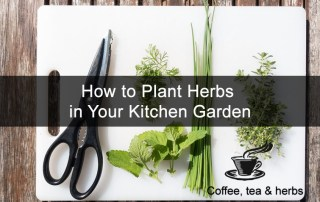How to Plant Herbs in Your Kitchen Garden