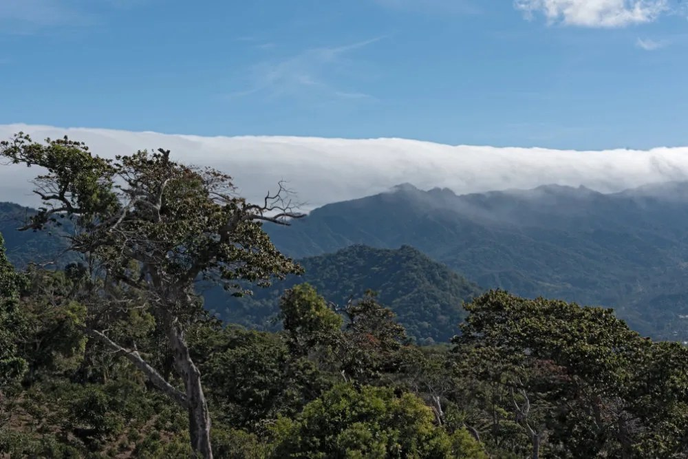 panama geisha coffee boquete cloud