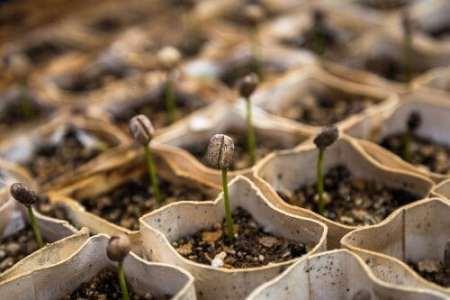 shade grown organic coffee beans