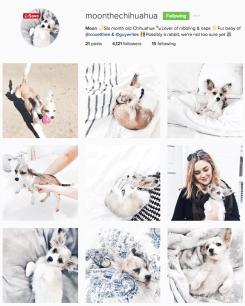 Tipa aceasta are și o pagină personală la fel de frumoasă ca și a câinelui https://www.instagram.com/moonthechihuahua/