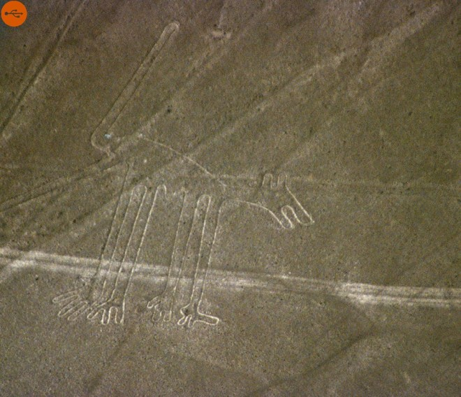 Dog Nazca