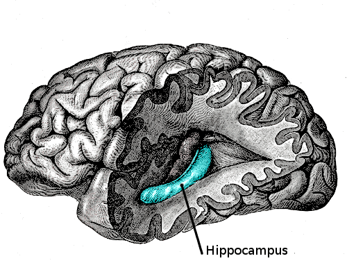 Role of hippocampus in time perception
