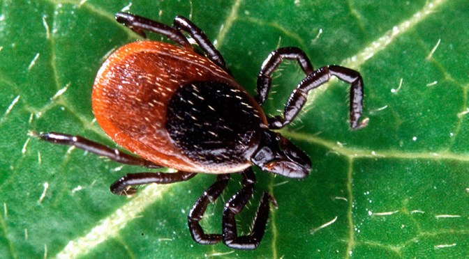 Ticks That Carry Lyme Disease Now In 45% Of US Counties