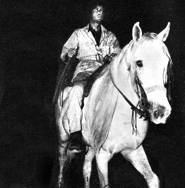 lc-astride-stallion