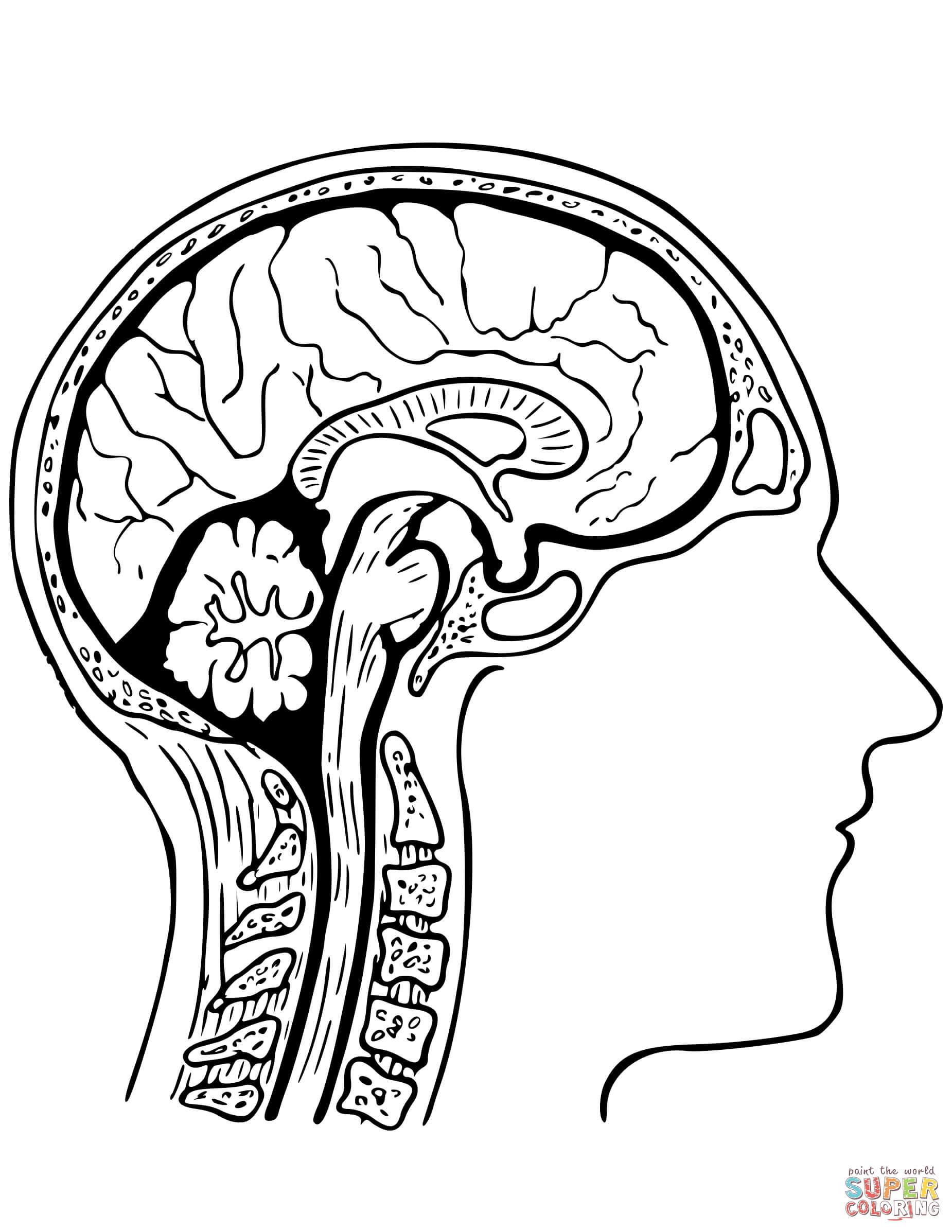 Brain Coloring