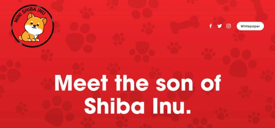 Mini Shiba