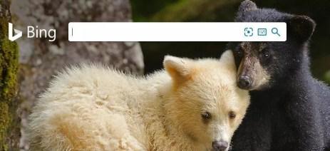 moteur de recherche alternatif Bing