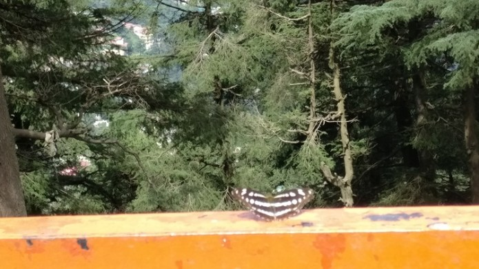 A butterfly soaking some sun at Jakhu hill