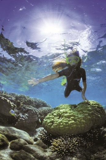 Plongée fonds marins