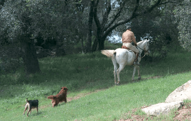 President Reagan horseback riding at Rancho del Cielo