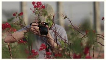 homem fotografando flores