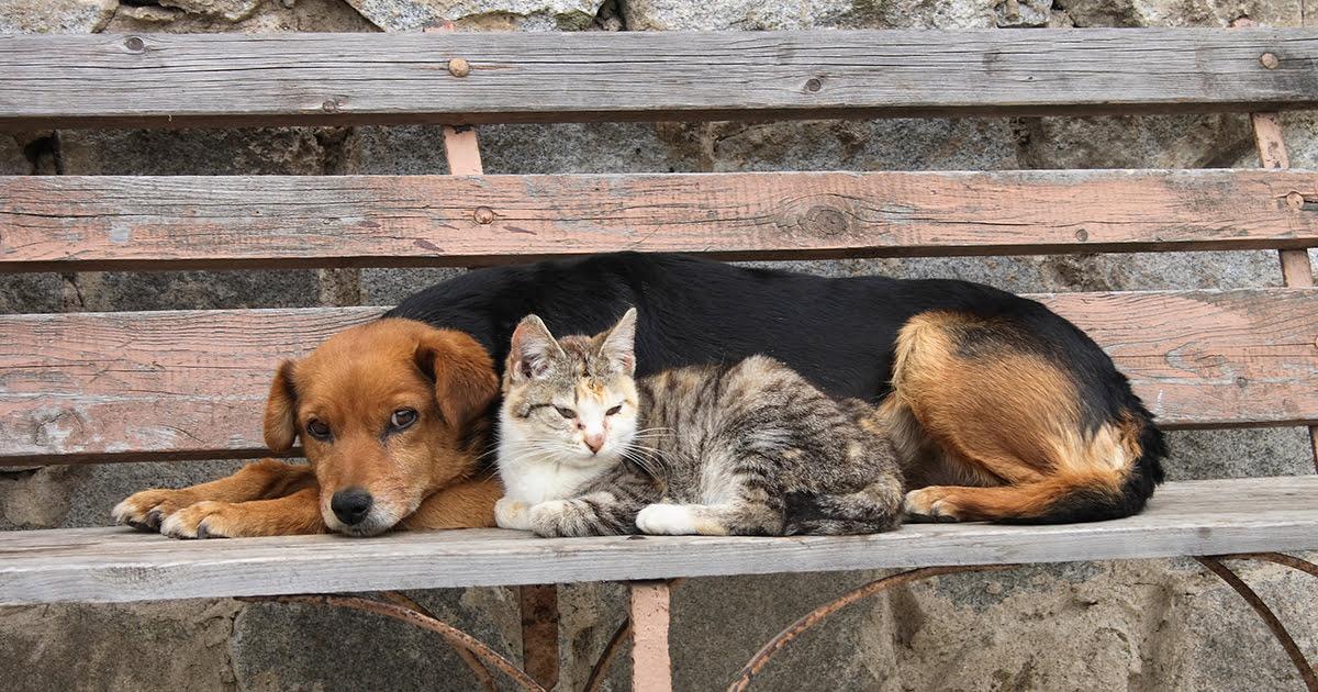 Animais abandonados no Japão