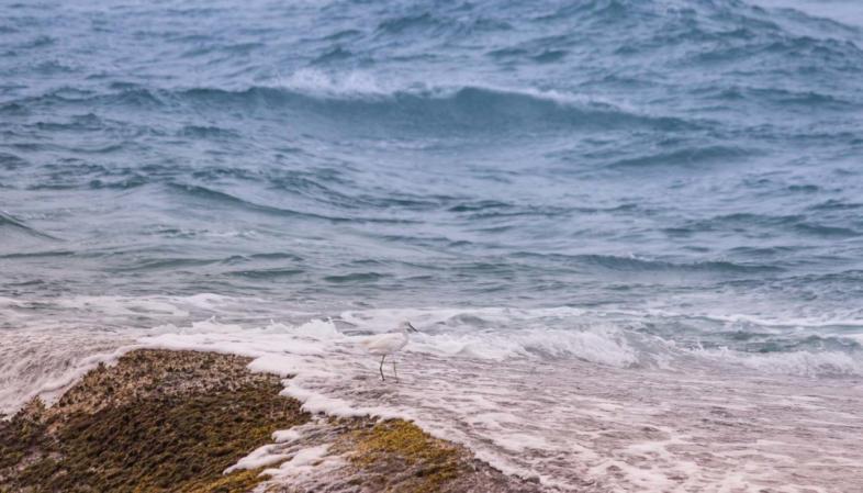 Ave pescando seu almoço na Praia Mole