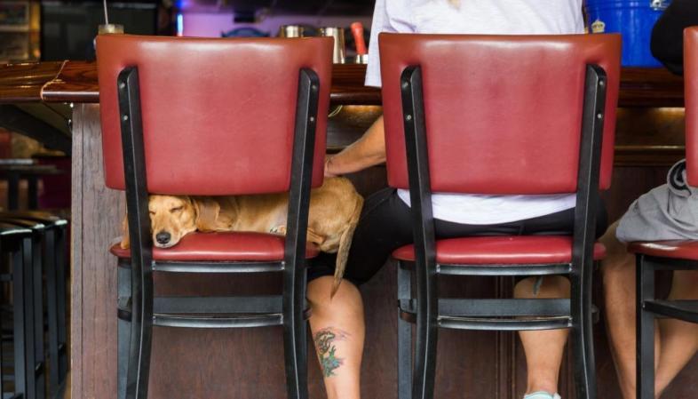 St. Pete - Em St. Petersburg, os cachorros são bem-vindos em praticamente todos os restaurantes, muitas vezes ganhando água e petiscos
