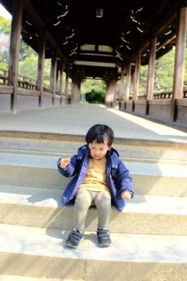 京都平安神宮と京都動物園を散策してみた