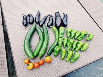野菜作りがハイテクななってた!