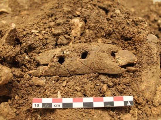 Steinzeitfund: Archäologen präsentieren Seilwerkzeug
