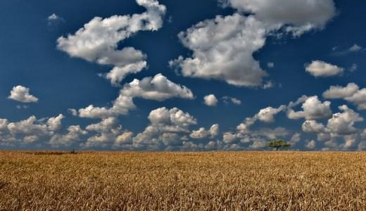 新規就農者の失敗しないコツ。◯◯農家になりなさい。