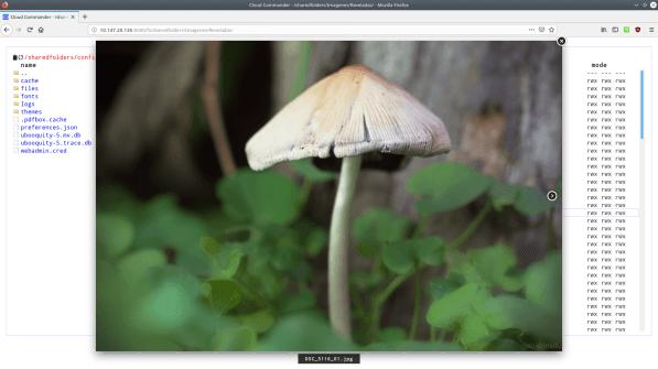 Captura de pantalla mostrando la fotografia de un hongo, visualizado mediante el visor de imágenes de Cloud Commander.