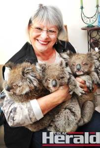 Apollo Bay's Pamela Carey is playing mum for Skye, left, Billy and BB who were all separated from their mothers during a storm this month.