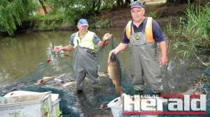 Fisherman Graham Milner and Colac Otway Shire Council's Andrew Barber remove tonnes of carp from Lake Colac. Crayfish fishermen will use the carp for bait.