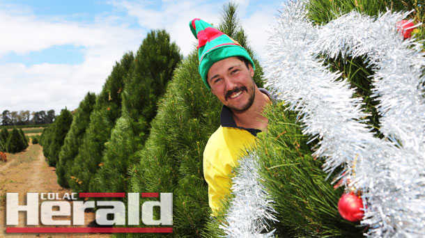 Colac Christmas Tree Farm Employee Trent Theodore Has Been