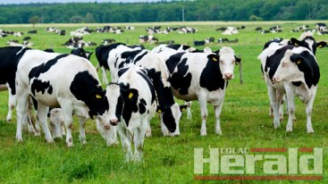 Criteria-could-restrict-milk-rescue-package