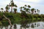 Gobierno de Los Cabos planteará  la creación de un fideicomiso a favor del Estero Josefino