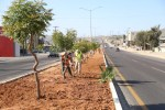 Gobierno de Armida Castro implementó el Programa de Mejoramiento en Camellones de Los Cabos