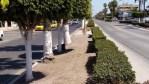 La Dirección de Parques y Jardines trabaja por una mejor imgen urbana