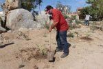 Reforestación de áreas verdes: prioridad del Gobierno de Los Cabos