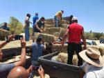 Oscar Leggs beneficia a más de 180 familias ganaderas
