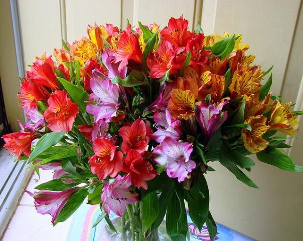 56184f80be6 Hoe lang bloemen vers te houden. Hoe een boeket vers te houden: tips ...