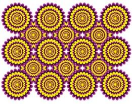A ilusão: as flores desabrocham A realidade: o padrão de cores de cada flor estimula as áreas do cérebro responsáveis por detectar movimento.