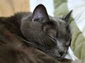 Good snooze