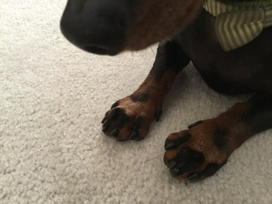 Brownie's striped feet