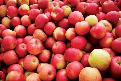 yabloki - Камеры для хранения яблок