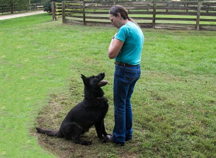 Coal von Narnia a male German Shepherd