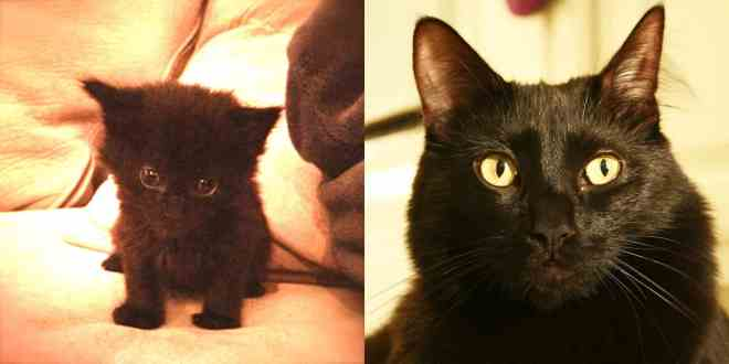 Kitten to Cat - #BlackCatsRule