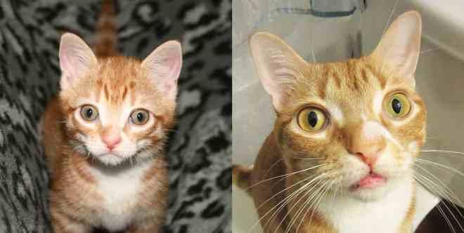 Marmalade has such a distinctive face, we love it!