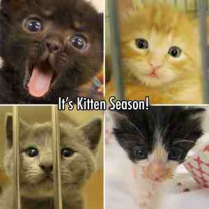 Kittens filmed at San Diego Humane Society.