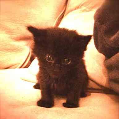 cole feral kitten