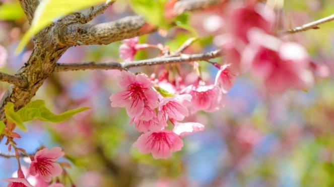 Compunere despre primăvară