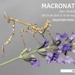 """Nueva exposición """"Macronatura"""""""