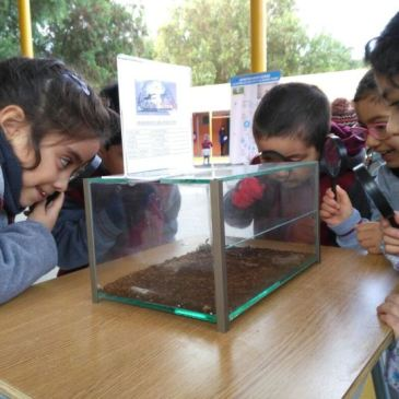 Mundos Bichos: Museo Itinerante de Insectos